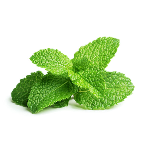 Click & Grow Peppermint against a white backdrop.