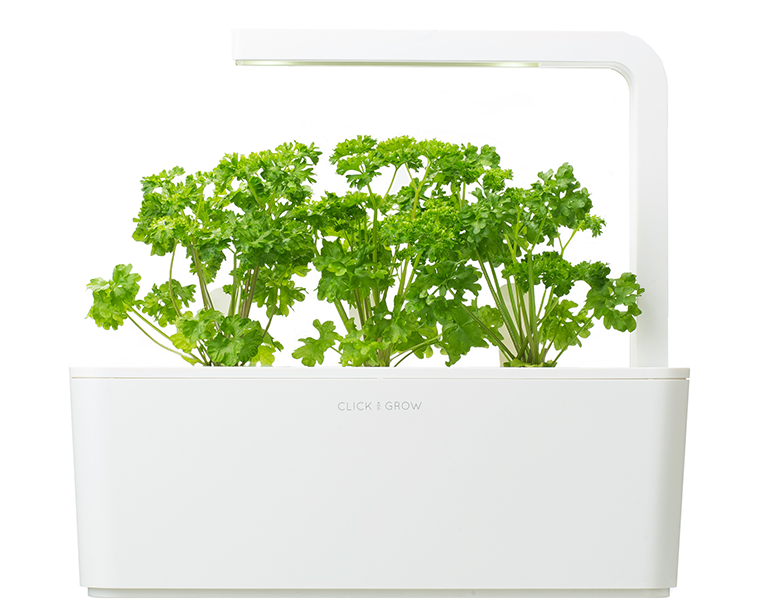 Parsley Refill