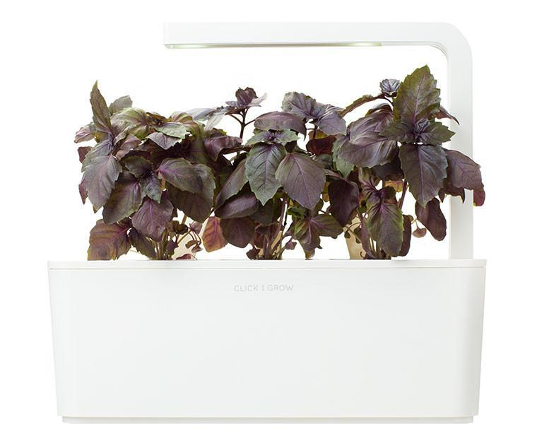 Red Basil 9-pack