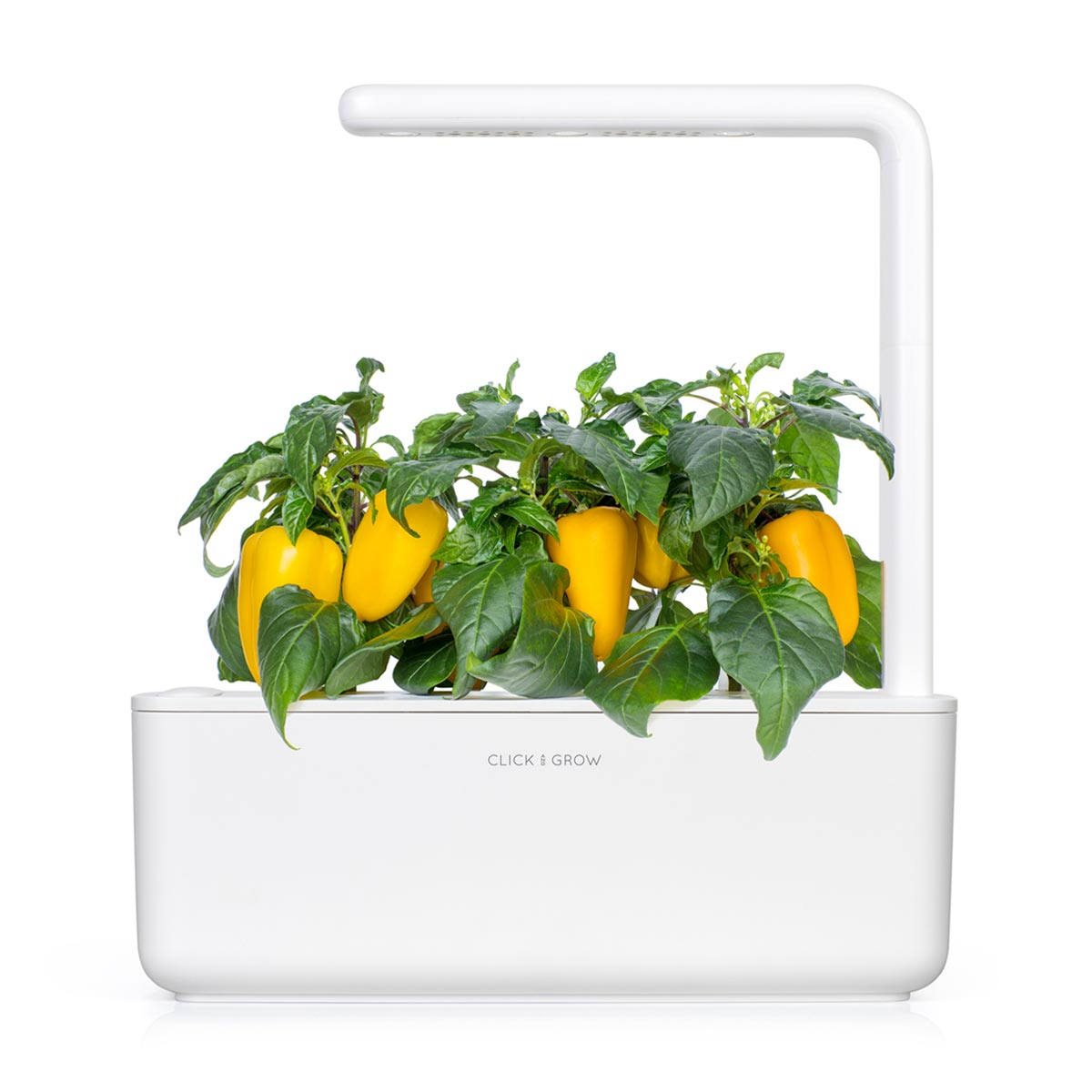 Yellow Sweet Pepper Refill