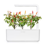 Red Hot Chili pepper capsule - Click & Grow indoor herb garden - Grow Chili Pepper at home with an indoor garden