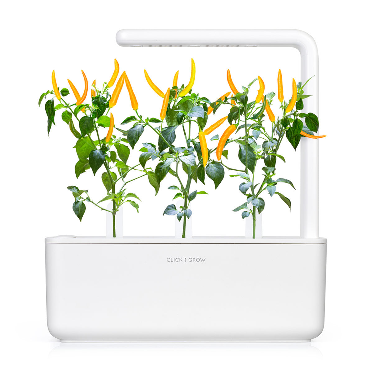 Chili Pepper (Capsicum annuum) refill - Click & Grow indoor garden