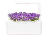Sweet Alyssum 9-pack