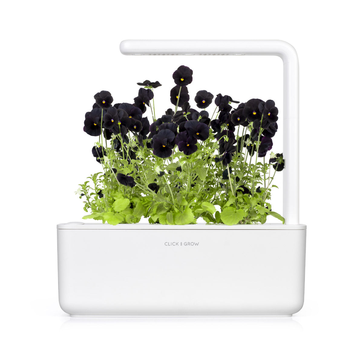 Click & Grow Indoor Herb Garden Black Pansy