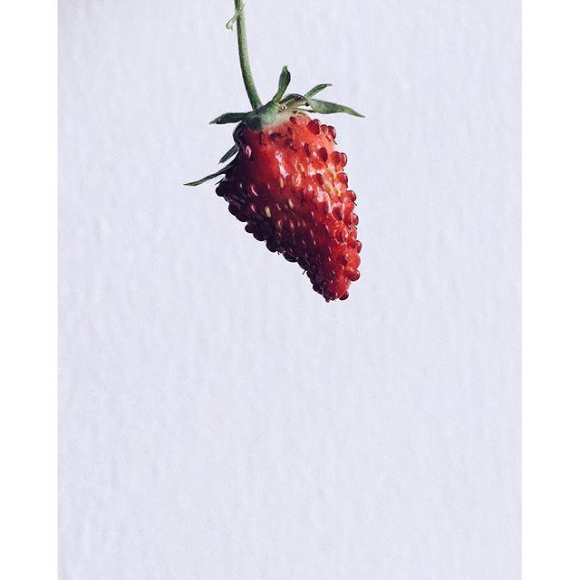 Wild Strawberry 9-pack