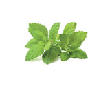 Lemon Balm Refill