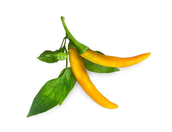 Yellow Chili Pepper Plant Pods