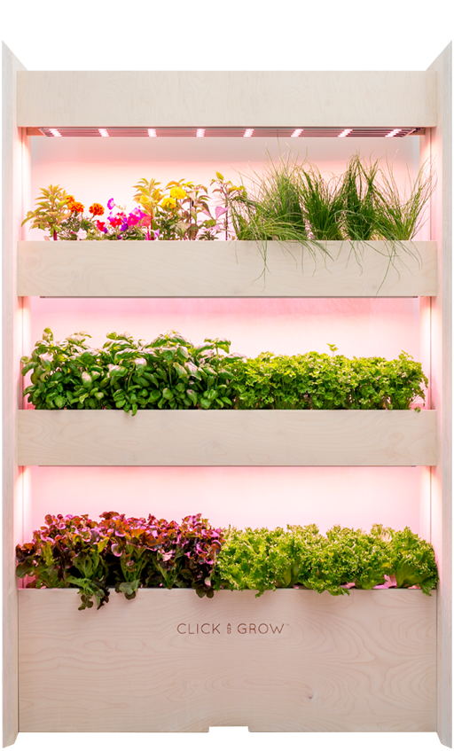 Wall Farms can be set up in public spaces like a coffee shop