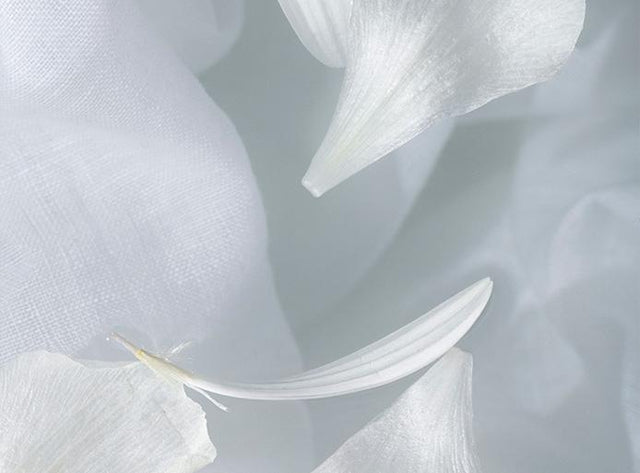 A close up image of white linen and white petals floating in water.
