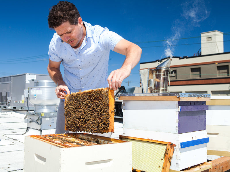 HONEY AND BEES WITH OUR HEAD BEEKEEPER RYAN LEBRUN