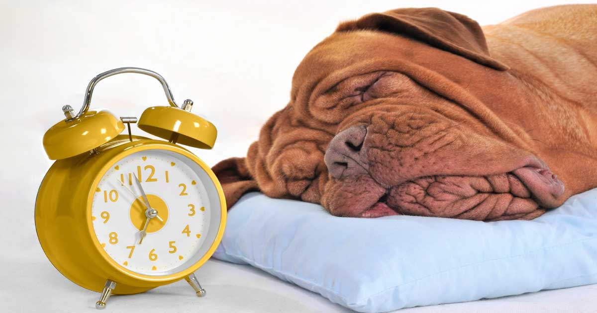 How the Clocks Changing Might Impact your Dog | BETTY & BUTCH®