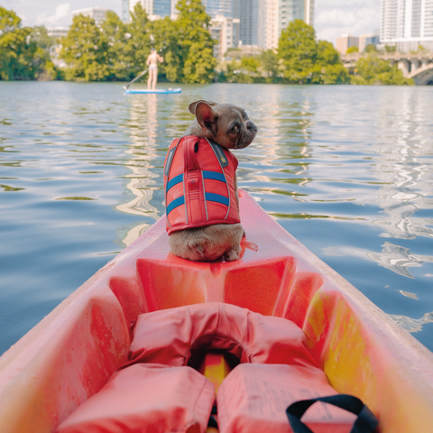 Dog Swimming Safety Tips
