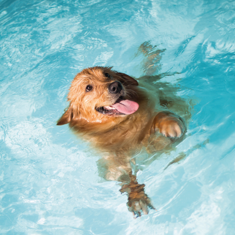 Dogs Who Are Strong Swimmers