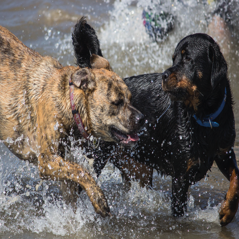 How to keep dogs safe on the beach and in the sea