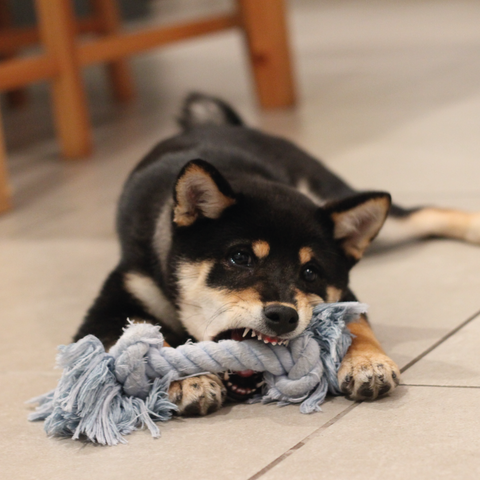 Top Tips for Teething Puppies