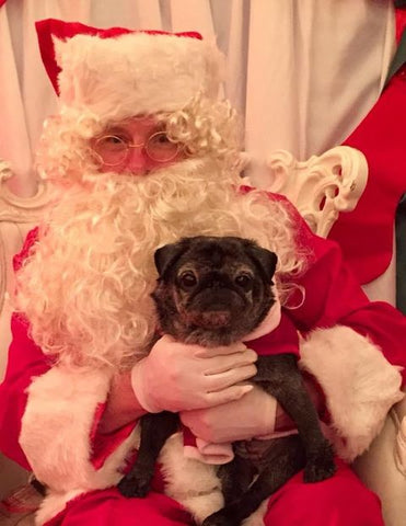 A pug sat with Father Christmas at Santa Paws event.