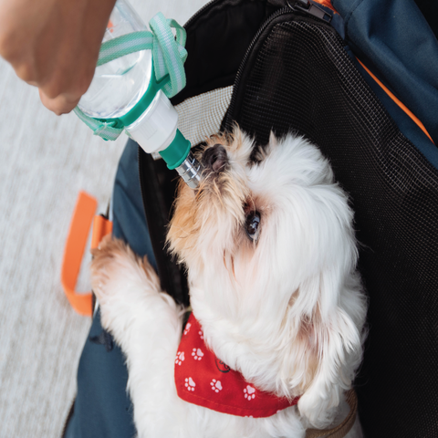 Signs you Dog is Dehydrated