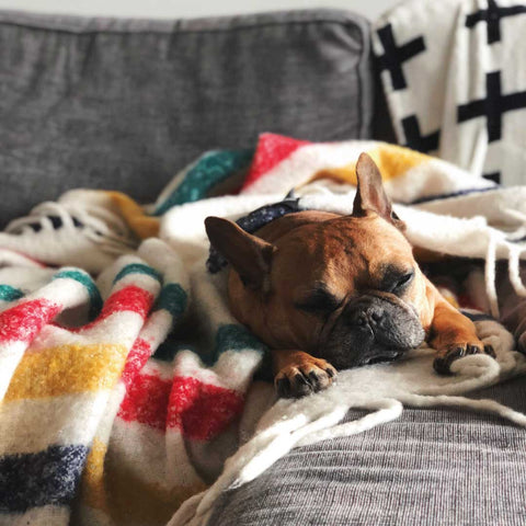 Start early with Calming Tablets for Dogs