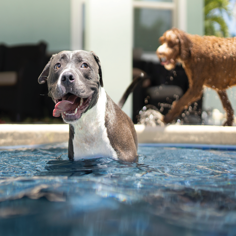 How to keep your dog safe when swimming
