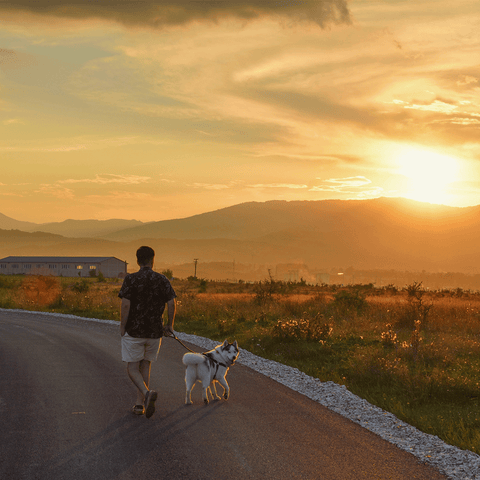 Walking your dog in the evening