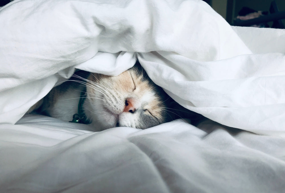 A cat asleep underneath blankets on a bed.