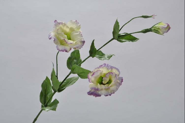 Purple & Cream Lisianthus Spray 81cm