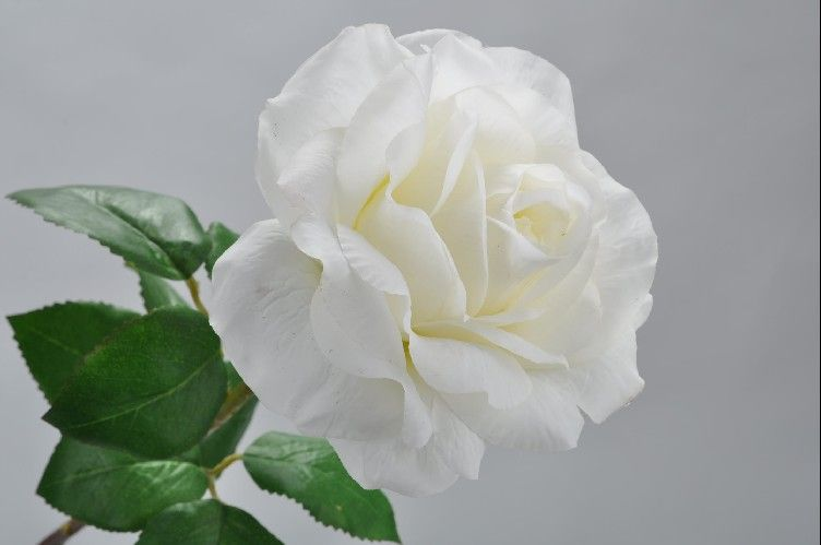 Cream Rose Stem 60cm