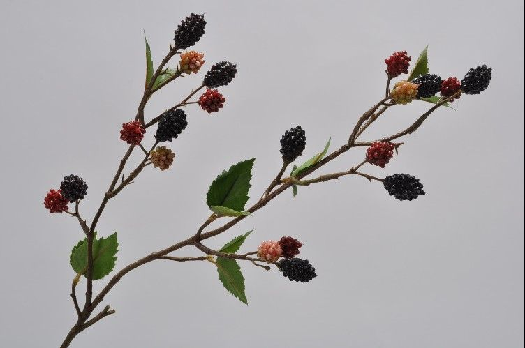 Blackberry Branch 64cm