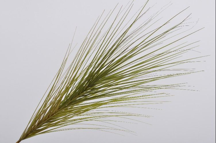 Load image into Gallery viewer, Grass Palm Stem 122cm