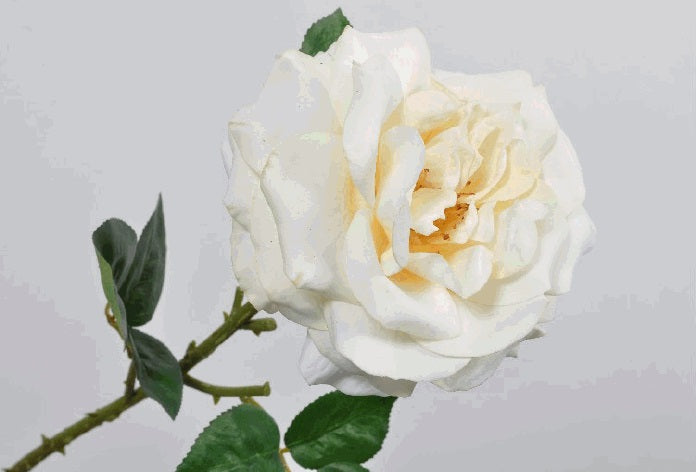 Cream Rose Stem 51cm