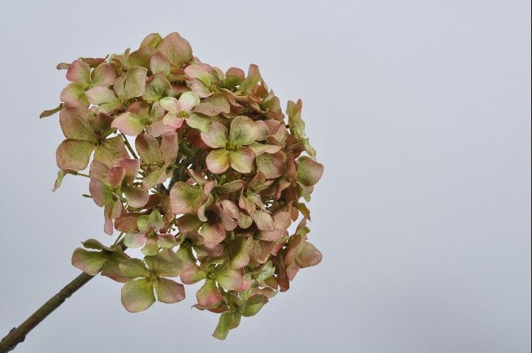 Load image into Gallery viewer, Green & Brown Hydrangea Stem 68cm