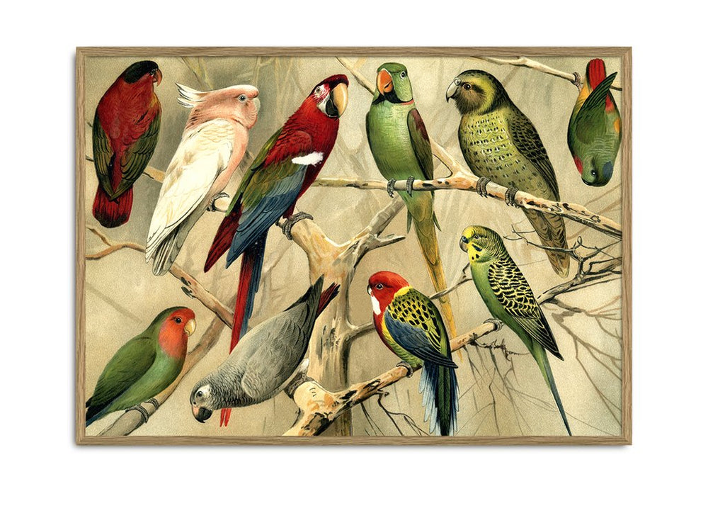 Load image into Gallery viewer, Encyclopedic Pair of Parrot Prints