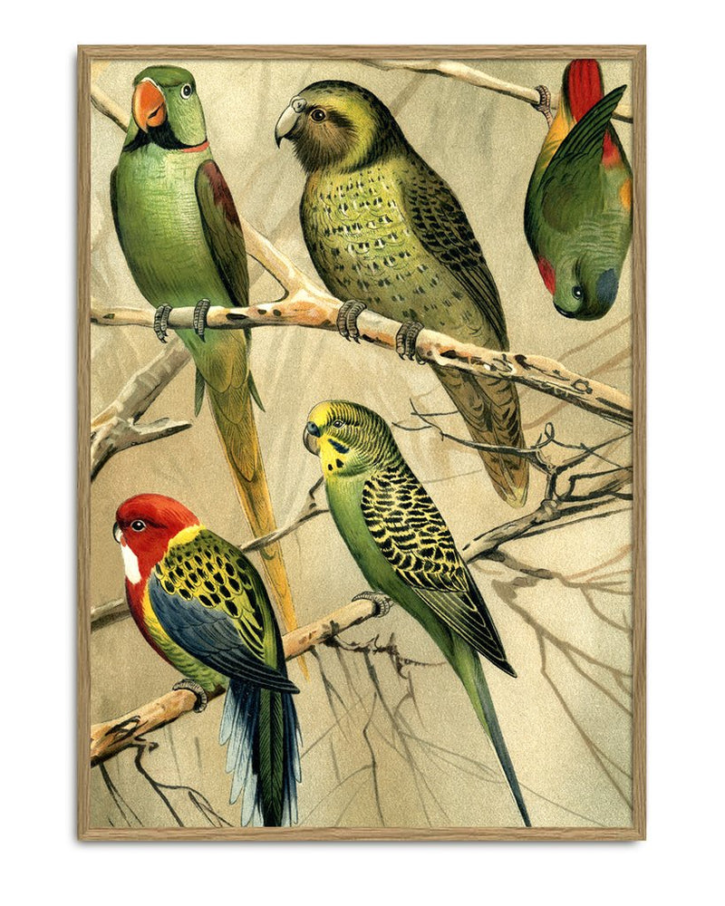 Encyclopedic Parrot Print (Right side)
