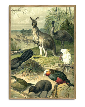 Encyclopedic Kangaroo Print (Right side of Kangaroo&Ostrich)
