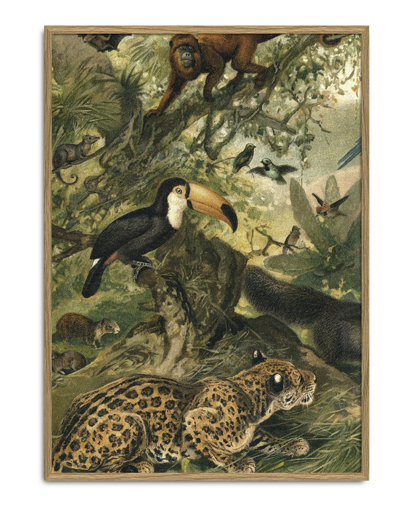 Encyclopedic Toucan Print (Left side of Toucan&Deer)