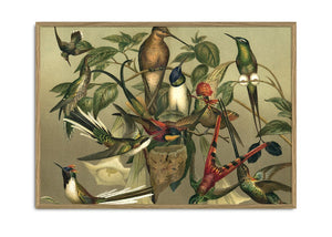 Load image into Gallery viewer, Encyclopedic Pair of Hummingbird Prints