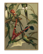 Encyclopedic Hummingbird Print (Individual)