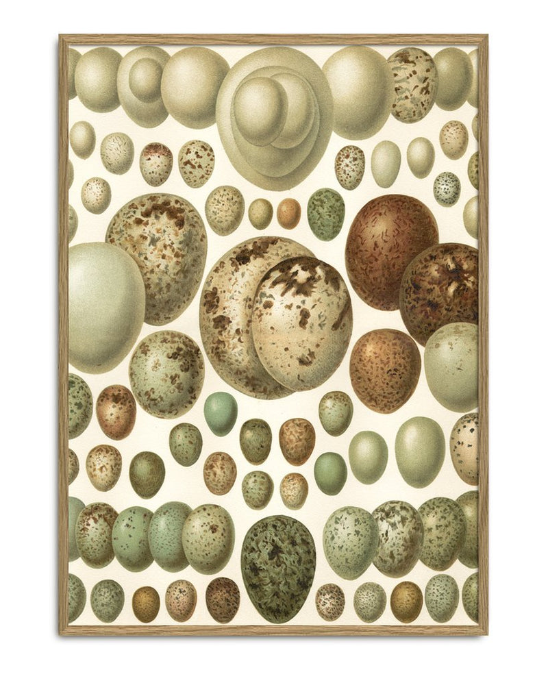 Load image into Gallery viewer, Encyclopedic Small Eggs Print