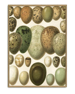 Encyclopedic Large Eggs Print