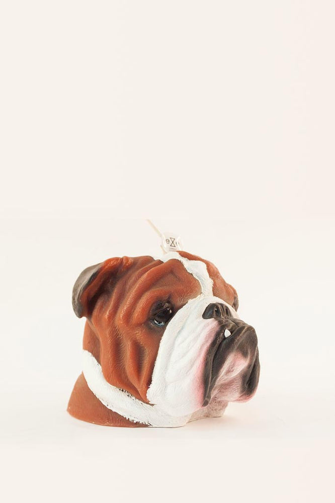 A side profile shot of our vanilla and Caramel scented painted bulldog candle