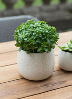 Ravello Plant Pot - Large