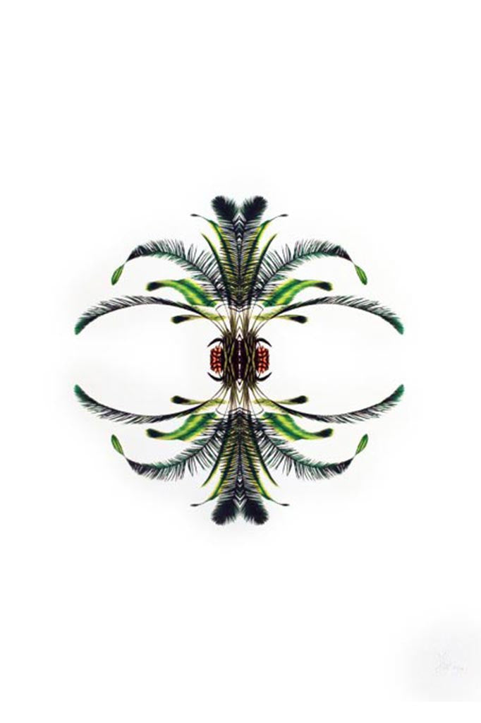 Botanical reflection print depicting fine detail in rich, vivid colour.