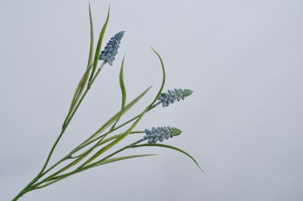 Blue Muscari Stem 58cm
