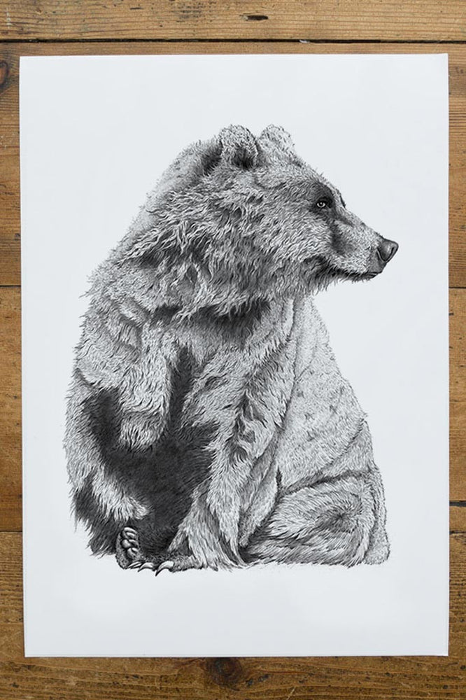 Black and white picture / drawing of a big wet bear