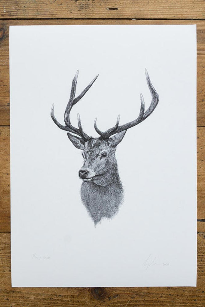 Print of drawing of a black and white stag with large horns facing slightly off centre