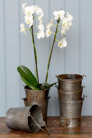Small reclaimed iron bucket with flowers in, next to a stack of buckets.