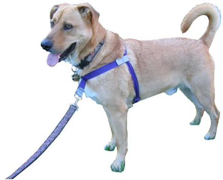 Walk Your Dog With Love Sportso Harness