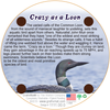 Coaster - Crazy as a Loon