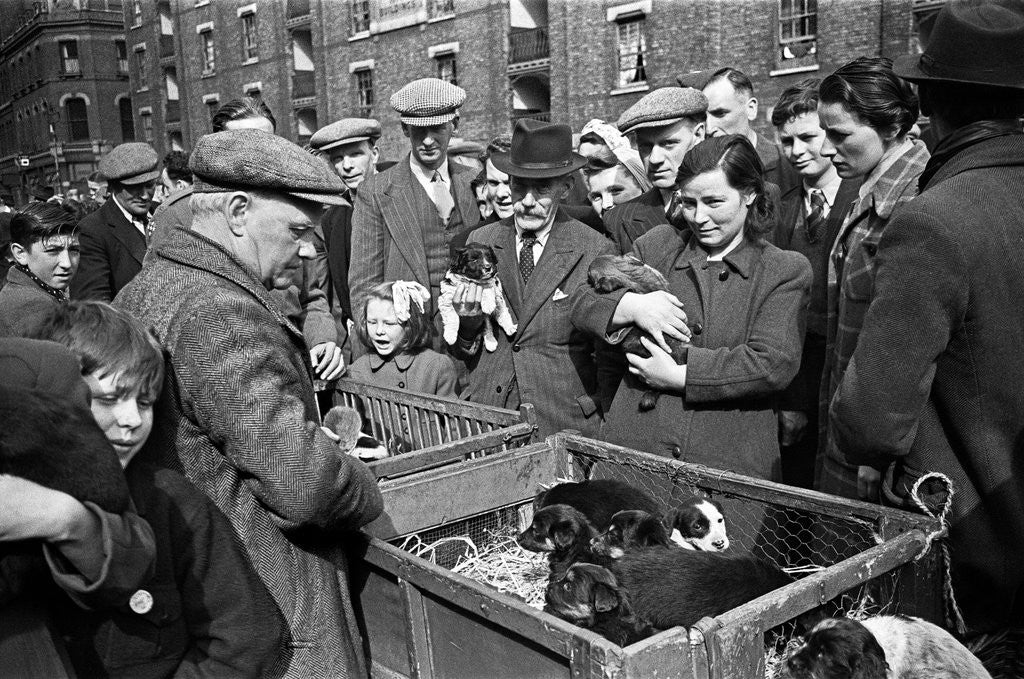 Detail of Bethnal Green Wast London Street Pet Market.  23rd May 1946 . by George Greenwell