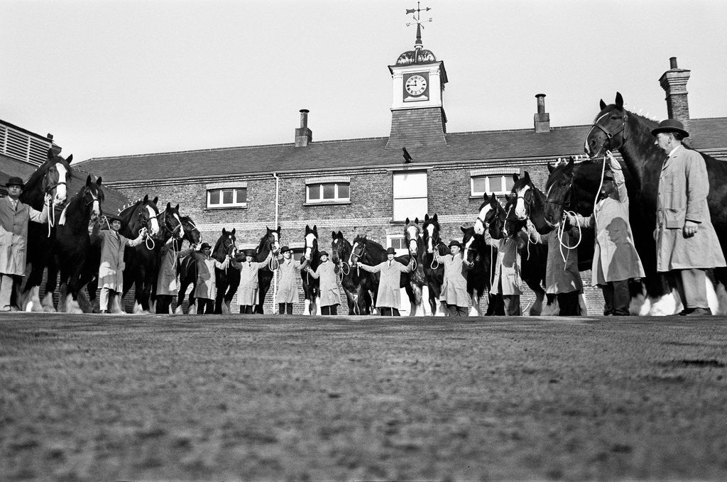 Detail of Young's Brewery Shire Horses, 12th February 1967 by Hope